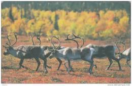 FINLAND - Animals, Autumn, Elisa Telecard, CN : ELI 000179, Tirage 12000, 09/01, Used - Finlandia