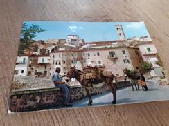 Postcard - Italia, Capoliveri, Donkeys   (V 32555) - Italia