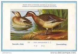 KBIN / IRSNB - Vogels / Oiseaux - 1943 - 232 - Anas Querquedula, Sarcelle D'été, Zomertaling, Garganey - Oiseaux