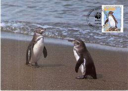 CM Equateur - Pingouin Des Galapagos (à Voir) - Pingouins & Manchots