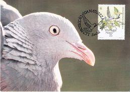 CM Madère  - Pigeon Laurel (à Voir) - Pigeons & Columbiformes