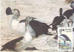 CM Venda - Waterfowl (to See) - Vogels