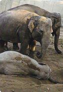 Elephant - Elefant - Olifant - L'éléphant - Elefante - Pocket Calendar - Calendrier De Poche - Calendario Bolsillo 2013 - Jungle
