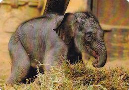 Elephant - Elefant - Olifant - L'éléphant - Elefante - Pocket Calendar - Calendrier De Poche - Calendario Bolsillo 2014 - Jungle