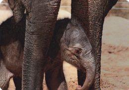 Elephant - Elefant - Olifant - L'éléphant - Elefante - Pocket Calendar - Calendrier De Poche - Calendario Bolsillo 2015 - Jungle