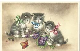 Katten Chats Cats Katzen 44341 - Chats