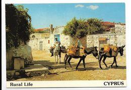 Rural Life - CPSM Chypre Cyprus - Paysan Sur âne - Cyprus