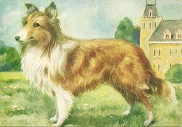 """G. Galbiati, Illustratore, """"Cane Collie, Dog, Chien, Hund"""" Illustrazione - Otros Ilustradores"""