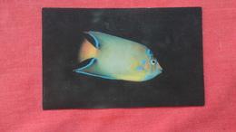 Queen Angelfish   ----ref 2727 - Fish & Shellfish