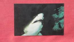 Sand Tiger Shark   ----ref 2727 - Other