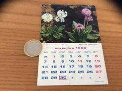 Calendrier 1966 (NOVEMBRE), Chromo évian «PRIMEVÈRE DENTICULÉE» - Calendars