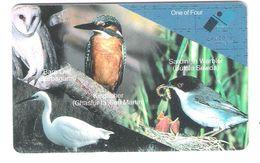 Malta - Malte - Bird - Birds - Vogel - Kingfisher - Owl - Malta