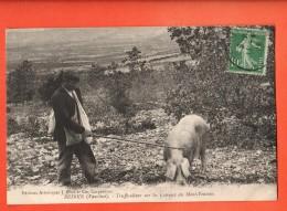 MIS-30 Bédoin Trufficulteur Sur Les Coteaux Du Mont-Ventoux.Cochon Truffier, Truffes Cachet Frontal 1923 - Autres Communes