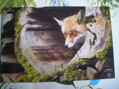 Portrait Of A Fox, Portrait D'un Renard - Animaux & Faune