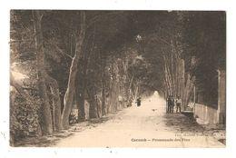 CPA 84 CAROMB Promenade Des Pins Animation Allée Longée D'arbres Tampon Hexagonal Garchizy 1924  Peu Commune - Frankreich