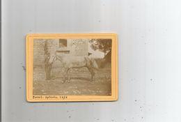 LAVERNOSE LACASSE (HAUTE GARONNE) LIEU DIT BERAIL . HOMME ET CHEVAL PHOTO 1898 - Lieux