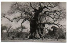 ZIMBABWE / Southern Rhodesia : UMTALI ( Fromager ? ). - Zimbabwe