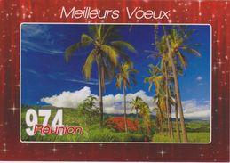 974 ILE DE LA REUNION  - Carte De Voeux - Allée De Cocotiers STE SUZANNE - Autres