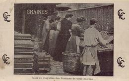 PARIS 1ER - Mise En Clayettes Des Pommes De Terre Hâtives - Distrito: 01