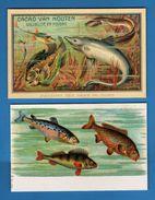 ANIMALI - PESCI - 2 Cartoline, Possibile Averle Separatamente.  RIPRODUZIONE. Vedi Descrizione - Pesci E Crostacei