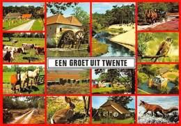Netherlands Een Groete Uit Twente, Mill Muehle Cows Horses Fox Animals - Non Classés