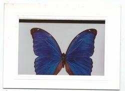 Carte Carnet Double Meilleurs Vœux De Guyane : Kourou Photo Pierre Buirette Très Beau Papillon Sur Papier Glacé - Nouvel An