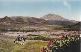 Lot De 2 Cartes Postales Semi Modernes De La Réunion : Cilaos , Plaine Des Caffres     Ed Ganowski - La Réunion