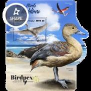 Maldives 2017 Bird - Oiseaux