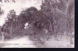 Guyane, Saint Laurent De Maroni ,avenue Des Cocotiers - Saint Laurent Du Maroni