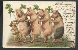 +++ CPA - Carte Fantaisie - Illustrateur ? - Cochon - Pig - Trèfle - Bonheur Chance   // - Pigs