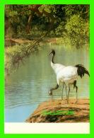 OISEAUX - RED-CROWNED CRANE - GRUS JAPONENSIS - - Oiseaux