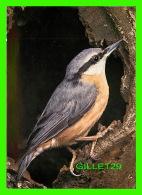 OISEAUX - SITTA EUROPAEA - KLEIBER - SITELLE TORCHEPOT - NUTHATCH - CIRCULÉE EN 1974 -  BOUTIQUE DIAMOND LEE - - Oiseaux