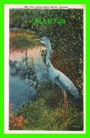 OISEAUX - THE GREAT BLUE HERON, FLORIDA -  DADE COUNTY NEWSDEALERS SUPPLY CO - - Oiseaux