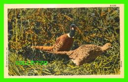 OISEAUX - A PAIR OF MONGOLIAN PHEASANTS - NORTHERN POST CARD CO - - Oiseaux