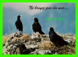 OISEAUX - ALPENDOHLE - CHOCCARDS À BEC JAUNE - ALPINE CHOUGH - EDITION DERIAZ BAULMES - - Oiseaux