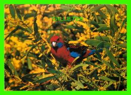 OISEAUX - CRIMSON ROSELLA - 1994 PICTURE PERFECT - - Oiseaux