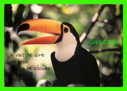 OISEAUX - TOCO TOUCAN - JE VAIS TE DIRE UN TRUC QUI VA TE CLOUER LE BEC - HALLMARK - - Oiseaux