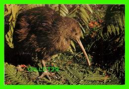 OISEAUX - NEW ZEALAND'S NATIONAL BIRDS KIWI - TRAVEL IN 1988 - - Oiseaux