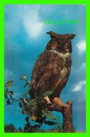 OISEAUX - HIBOU - OWL'S SCOWL  - H. V. HENDERSON - - Oiseaux
