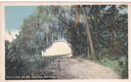 Florida Daytona Royal Oak On The Halifax River