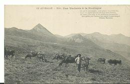63 Auvergne     Une Vacherie A La Montagne - Auvergne Types D'Auvergne