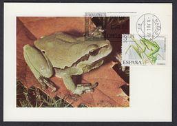 SPAIN 1973 MAXIMUM CARD FROGS - (Hyla Arborea) - Rane