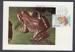 SPAIN 1973 MAXIMUM CARD FROGS - (Rana Temporaria) - Rane