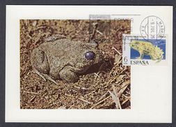 SPAIN 1973 MAXIMUM CARD FROGS - (Alytes Obstetricans) - Rane