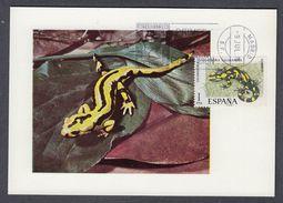 SPAIN 1973 MAXIMUM CARD (Salamandra Salamandra) - Altri
