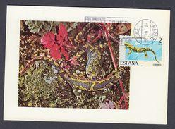 SPAIN 1973 MAXIMUM CARD (Triturus Marmoratus) - Altri