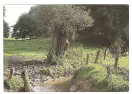 Lasne - Vallée Du Smohain - Photo Jean-Pierre Gabriel - éditions Lasne Nature - état Neuf - Lasne