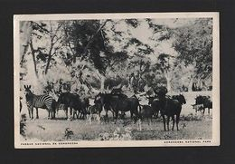 Pc AFRICA MOZAMBIQUE GORONGOSA PARK WILD LIFE ANIMAL ELEPHANTS 1960s Z1 AFRIKA - Postcards