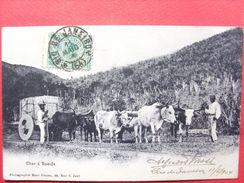 Brésil ,attelage Char à Boeufs  En 1904......timbres Et Cachets - Brésil