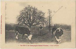 La Vie De La Campagne Dans L'Yvonne - Dans La Prairie - France